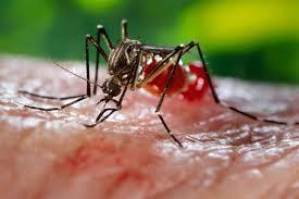 Dengue Disses , Govt Approve the Plan