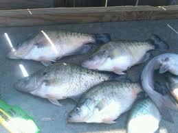 حضورصل اللہ علیہ وسلم نے مچھلی کے بارے میں کیا کہا