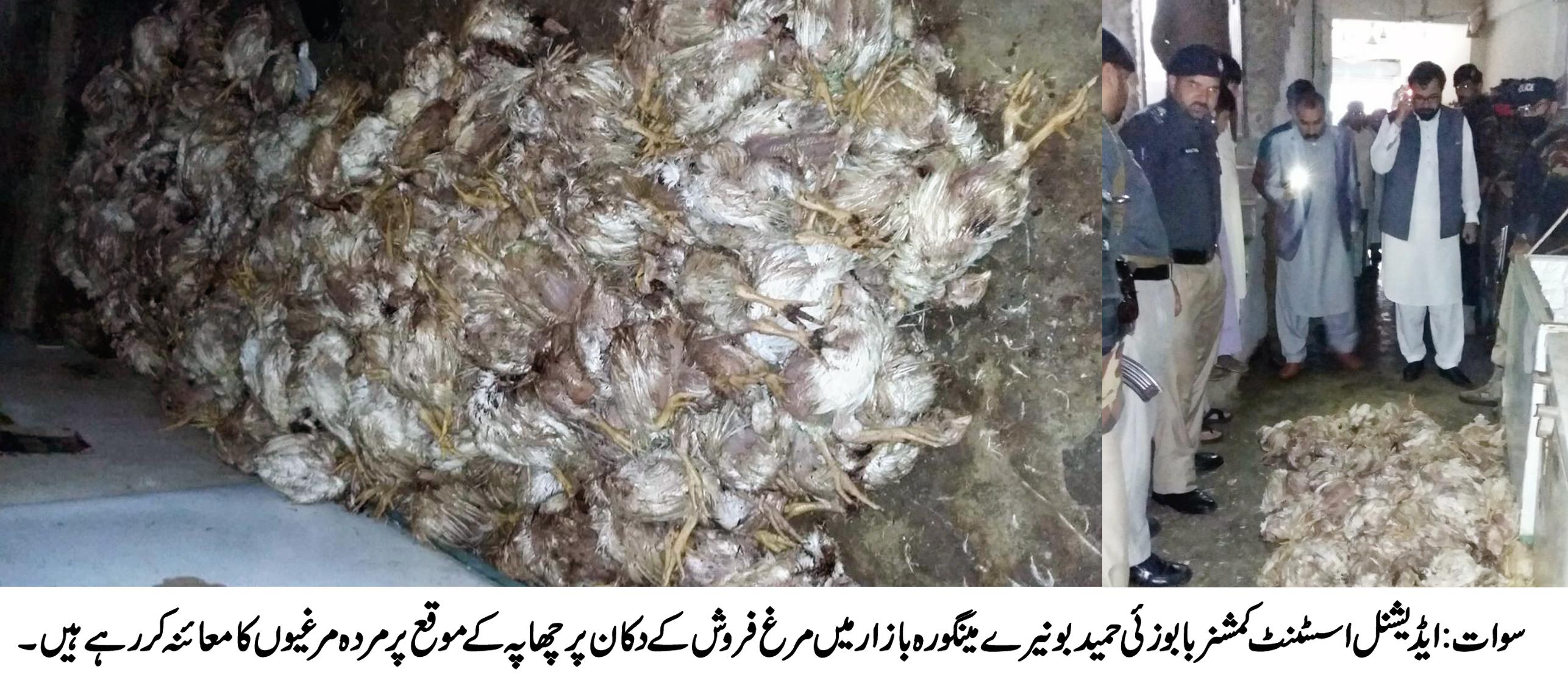 ضلعی انتظامیہ کی بڑی کاروائی ، مینگورہ شہر میں 300سے زائد مضر صحت مردہ مرغیاں برامد