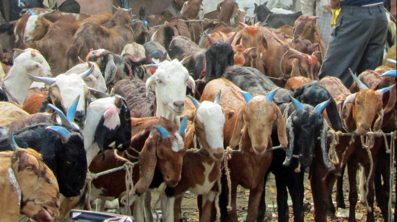 سوات میں محلے محلے میلے لگ گئے ، گاہک زیادہ جانوربھی زیادہ پھر خریدار کم ، اخر کیوں؟