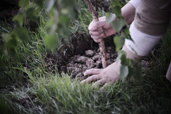 زیادہ درخت لگانے سے سوات کا حسن دوبالاہوگا، ڈی سی ثاقب رضا
