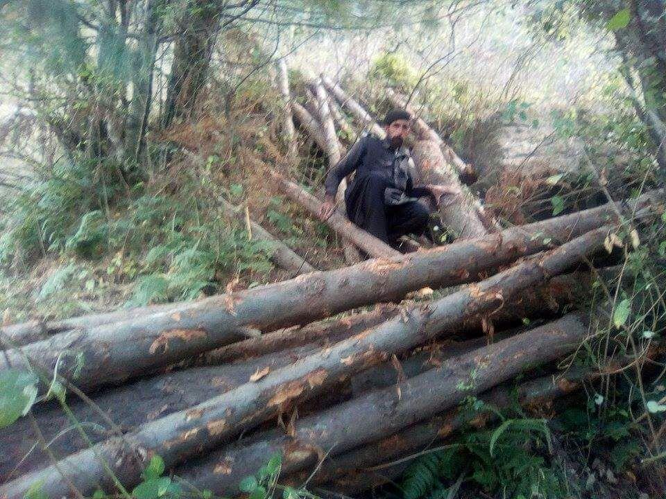 کالام میں درختوں کی تباہی، وزیر اعظم کا بلین ٹری سونامی ناکام بنانے کا منصوبہ،ہزاروں درخت کاٹ دئے گئے