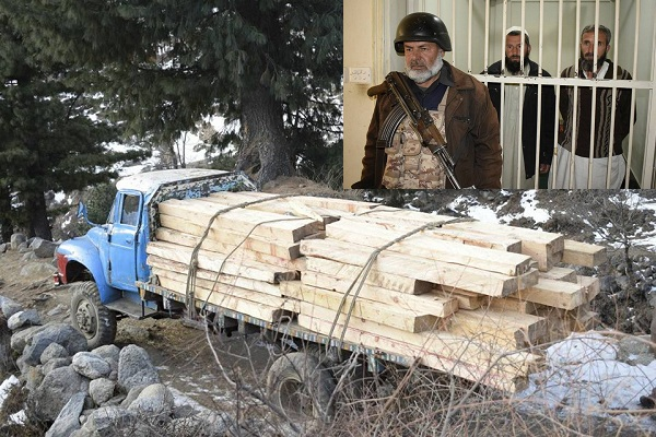 محکمہ جنگلات کا تحصیل مٹہ میں کارروائیاں، غیر قانونی لکڑی برآمد