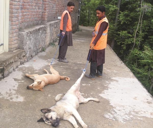 کبل ،تحصیل میونسپل کمیٹی پاگل اور اوارہ کتوں کو ٹھکانے لگا دیا