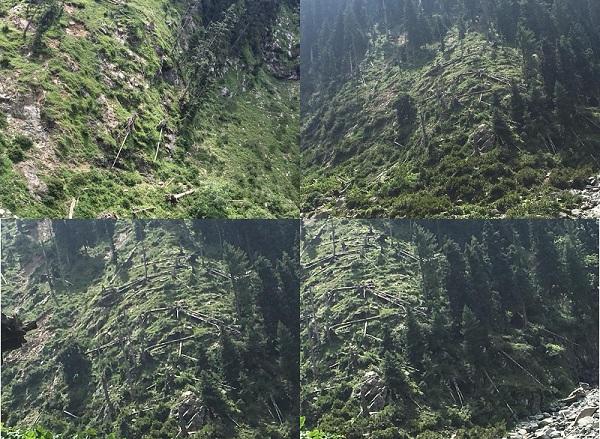 سوات میں ایک ایسی سیاحتی مقام بھی موجود ، جہاں پر ہزاروں درخت گرے پڑے ہیں