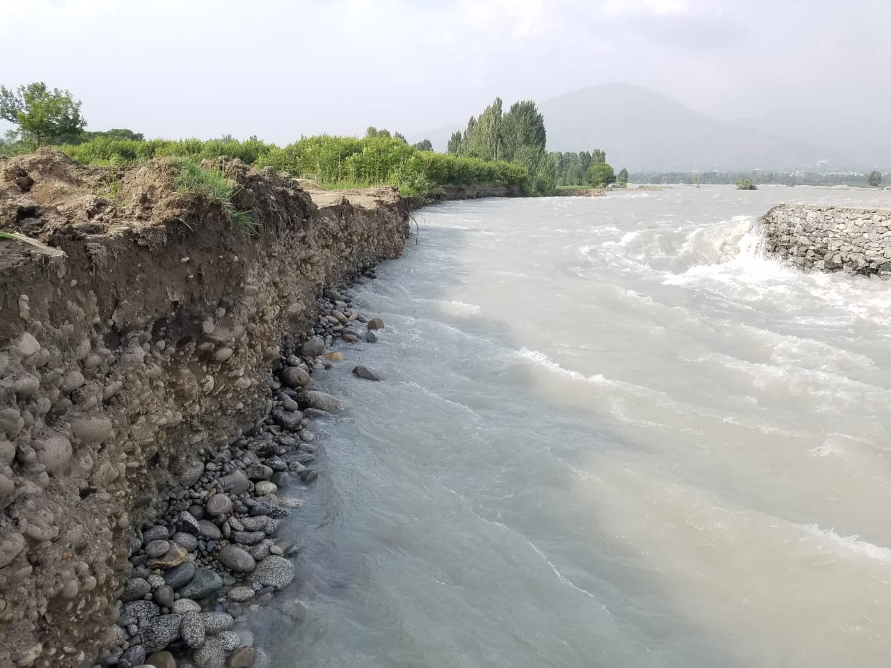 دریائے سوات کی بہاو میں مسلسل اضافہ،کھڑی فصلیں اور کئی مکان زیر آب