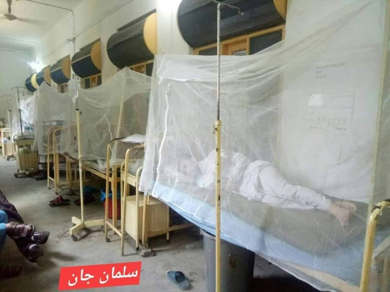 ڈینگی بخار وباء بن گئی،سوات میں سیکڑوں افراد ڈینگی کا شکار
