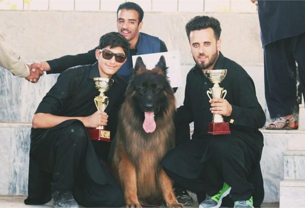 سوات میں پہلا ڈاگ شو ، شائقین کی امد ، کتوں کی کیٹ واک