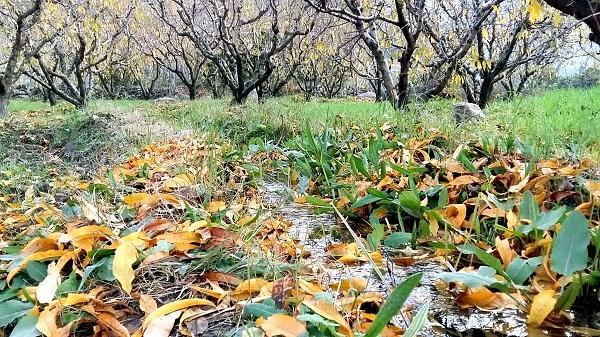 سوات کا موسم خزاں  ۔  ۔ ۔ قدرتی رنگوں کا بہار