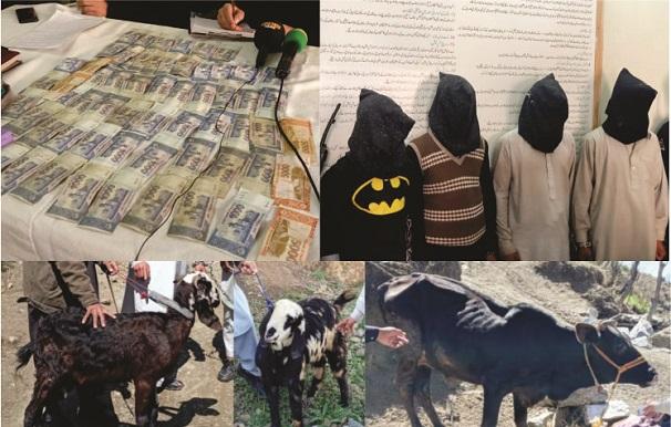 سوات، ننگولئی میں مویشیاں چوری کرنیوالا گروہ گرفتار