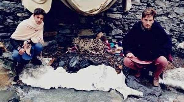 چترالی نوجوان نے نایاب نسل کےبرفانی چیتے کی جان بچالی